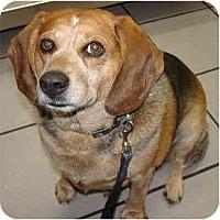 Adopt A Pet :: Tajma - Portland, OR