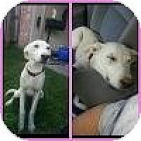 Adopt A Pet :: Sunny - New Boston, NH