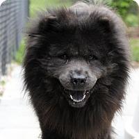Adopt A Pet :: Chumba - Tucker, GA