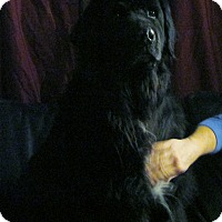 Adopt A Pet :: Bailey - Adoption pending - Lee's Summit, MO
