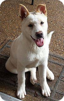 German Shepherd Dog/Husky Mix Dog for adoption in Memphis, Tennessee - Marzipan