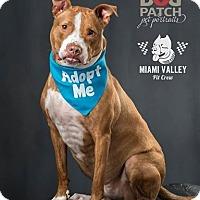 Adopt A Pet :: Curie - Dayton, OH