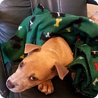 Adopt A Pet :: Gator - Natchitoches, LA