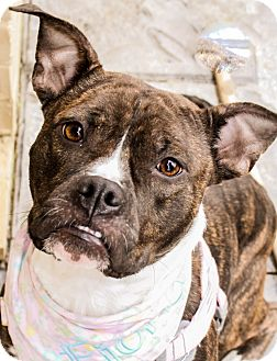 Boxer Mix Dog for adoption in Memphis, Tennessee - Fiona