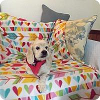 Adopt A Pet :: Putt Putt Putnam/Sponsor Me! - Kannapolis, NC