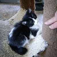Adopt A Pet :: Oi - Lancaster, CA