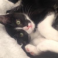 Adopt A Pet :: Serena - Houston, TX