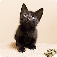 Adopt A Pet :: Pilsen - Chicago, IL