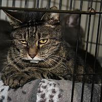 Adopt A Pet :: Raven (Spayed) - Marietta, OH