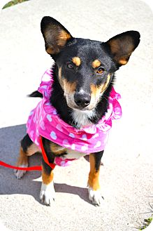 Shepherd (Unknown Type) Mix Dog for adoption in Corpus Christi, Texas - Buffy