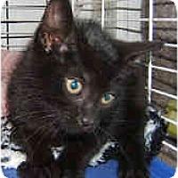 Adopt A Pet :: Charcoal - Dallas, TX