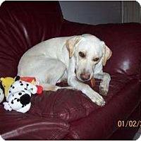 Adopt A Pet :: Sam - Altmonte Springs, FL