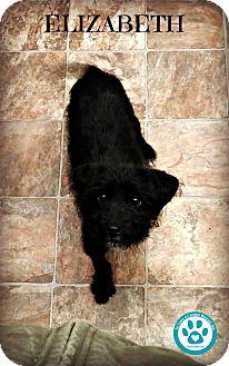 Terrier (Unknown Type, Small) Mix Puppy for adoption in Kimberton, Pennsylvania - Elizabeth