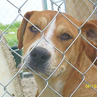 Adopt A Pet :: Adonis - Mexia, TX