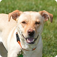 Adopt A Pet :: Isabella - Lewisville, IN