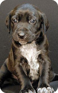 Hound (Unknown Type) Mix Puppy for adoption in Newland, North Carolina - Hendricks