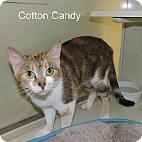 Adopt A Pet :: Cotton Candy - Slidell, LA