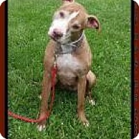 Adopt A Pet :: Mabaline - Huntington, IN