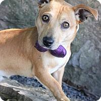 Adopt A Pet :: Simon - Dalton, GA