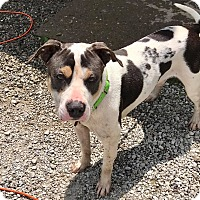 Adopt A Pet :: RUDY - Cadiz, OH