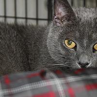 Adopt A Pet :: Jasmine (Spayed) - Marietta, OH
