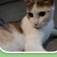 Adopt A Pet :: Mae - Crestview, FL