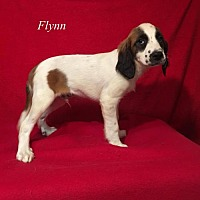 Adopt A Pet :: Flynn - Chester, IL