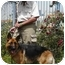 Photo 4 - German Shepherd Dog Mix Dog for adoption in Los Angeles, California - Tiffany von Tauben