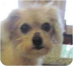 Cairn Terrier/Terrier (Unknown Type, Medium) Mix Dog for adoption in Allentown, Pennsylvania - Jimmy
