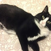 Adopt A Pet :: Adult - Chesterfield, VA