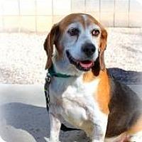 Adopt A Pet :: Sully - Phoenix, AZ