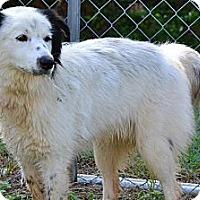 Adopt A Pet :: Nate - Dandridge, TN