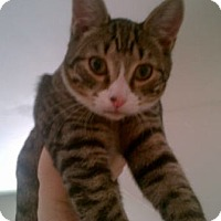 Adopt A Pet :: Waldo - Kensington, MD