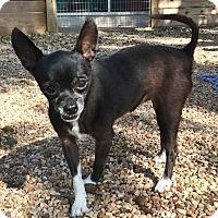 Adopt A Pet :: Cricket - AUSTIN, TX