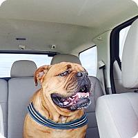 Adopt A Pet :: Lulu - Decatur, IL