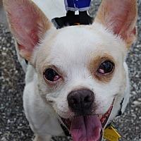Adopt A Pet :: Jordy - Southeastern, PA