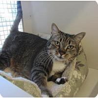 Adopt A Pet :: Sissie - Kingston, WA