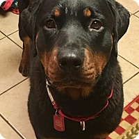 Adopt A Pet :: Falkor - Frederick, PA