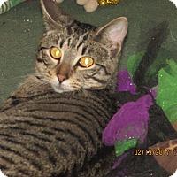 Adopt A Pet :: Taz - DeRidder, LA