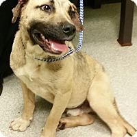 Adopt A Pet :: Bruno - Irmo, SC