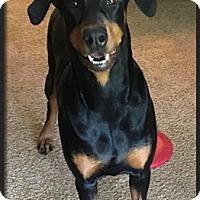Adopt A Pet :: Addie - Columbus, OH