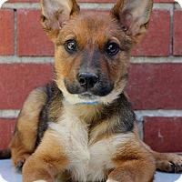 Adopt A Pet :: Howard - Waldorf, MD