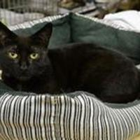 Adopt A Pet :: Gwendolyn - Erie, PA