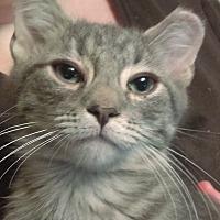 Adopt A Pet :: Bear - Brookhaven, PA