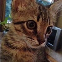 Adopt A Pet :: Mel  (Foster Care) - Baton Rouge, LA