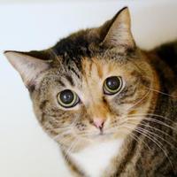 Adopt A Pet :: Maggie - Charleston, SC