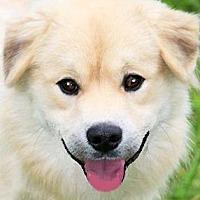 Adopt A Pet :: TAY(A TRUE COMPANION!!) - Wakefield, RI