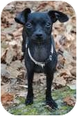 Chihuahua Mix Dog for adoption in Foster, Rhode Island - Zoey & Sugar Baby
