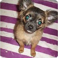 Adopt A Pet :: Spunky - Tamarac, FL