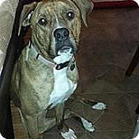 Adopt A Pet :: *DAISY - Kingston, WA